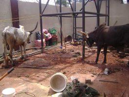 My first experience abroad: Benin, Nigeria