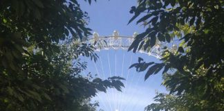 London Eye • Cultured Black Pearl