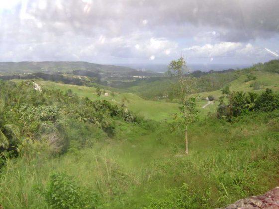 Lush Barbados
