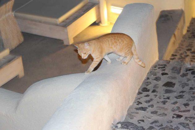 Mystique Hotel Cat: Santorini, Greece
