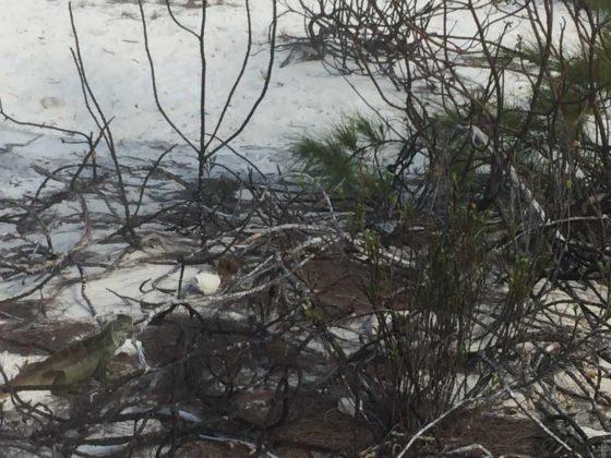 Iguana Bay Turks and Caicos