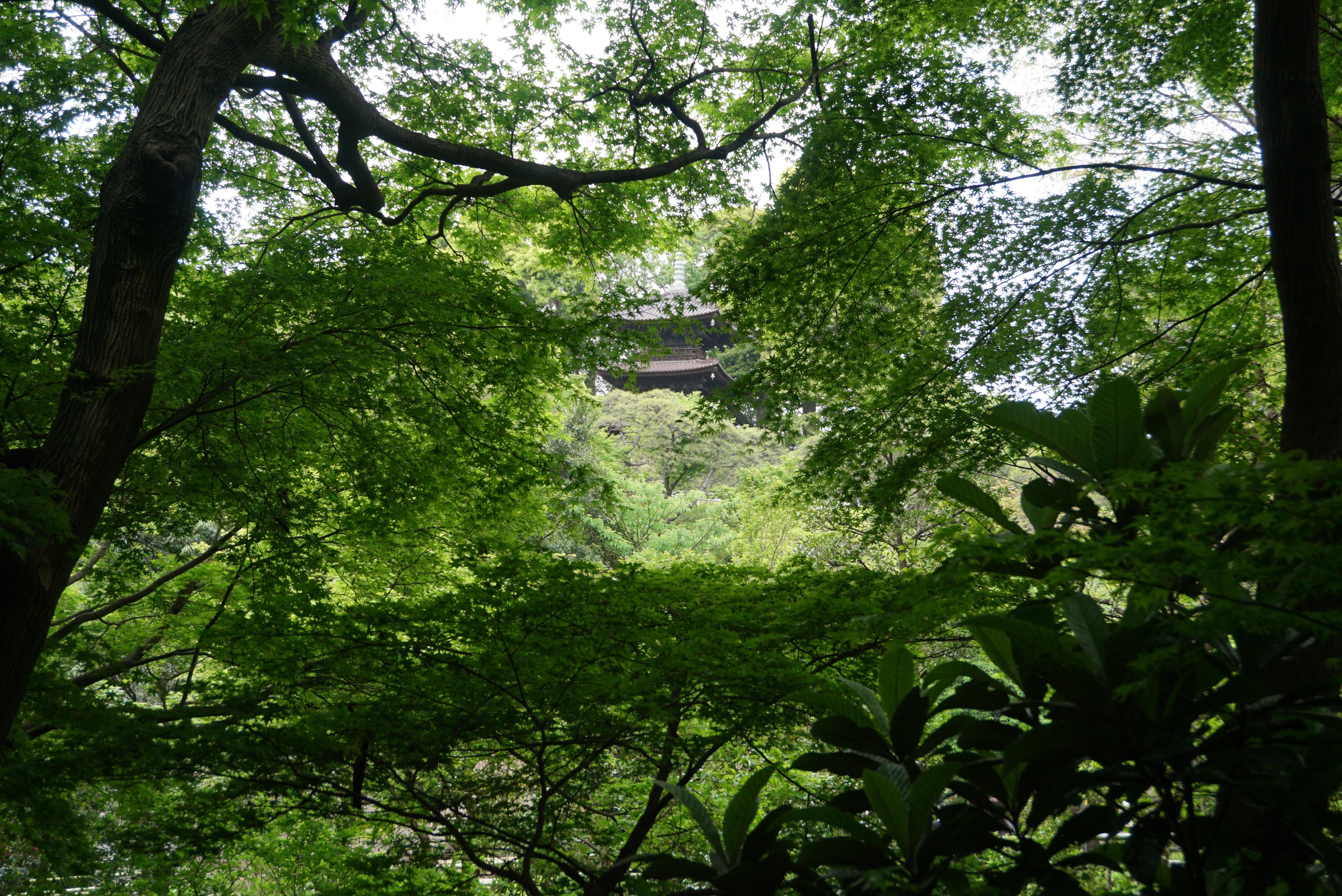 Garden View of Pagoda